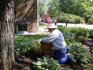 WH-gardening
